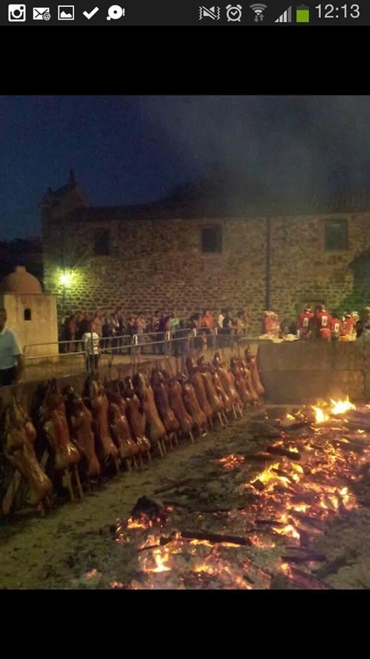 cadaveri di maialini